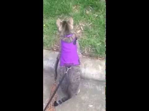 Squeak taking a walk in her Mynwood Cat Jacket