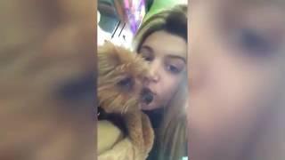 Tubidy ioFunniest Animal Attacks Compilation July 2017   funny  Videos