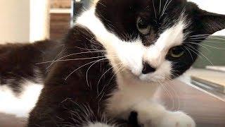 しゃべる猫おむすびさんが何かを訴えてきた朝 thumbnail