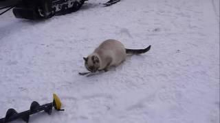 Как кошка ловит рыбу.  Рыбалка .