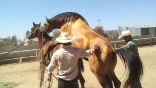 USA Agriculture Technolog | Horse Breeding thumbnail