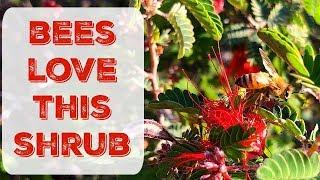 How To Attract Honey Bees To Your Garden - Gardening in Arizona, California, New Mexico, & Nevada
