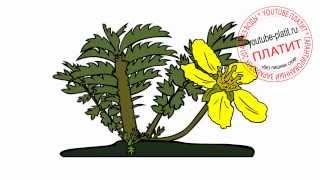 Как нарисовать желтый цветок поэтапно карандашом(Как нарисовать дружную семью поэтапно карандашом за короткий промежуток времени. Видео рассказывает о..., 2014-07-02T05:41:00.000Z)