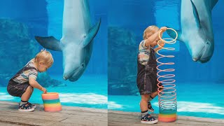 Cute Dolphin & Baby Playtime + NEW Walking With Giants Whales Exhibit! | Clearwater Marine Aquarium!