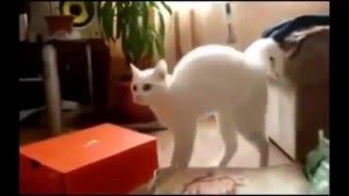 ###Как пугаются котики прикольно! Смешные видео про котов!!!###