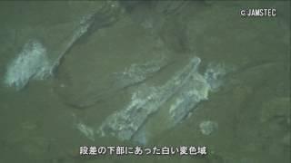 三陸沖での東北海洋生態系調査研究船「新青丸」による 海底観察等の結果について