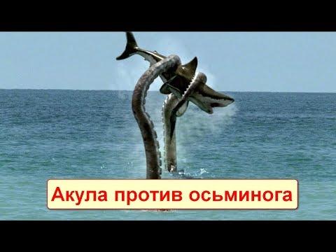 Вопрос: Кто сильнее медведь или акула?