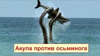 САМЫЕ СУМАСШЕДШИЕ БИТВЫ МОРСКИХ ЖИВОТНЫХ! Акула против осьминога