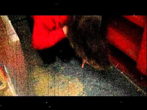 Marissa Quinn Commercial