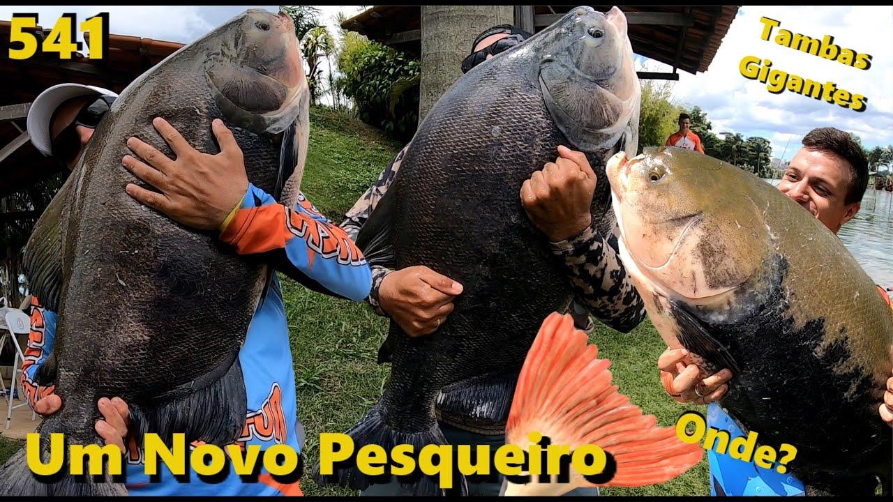 Descobrimos o Pesque Pague Taguatinga em Goiás - Fishingtur na TV 541