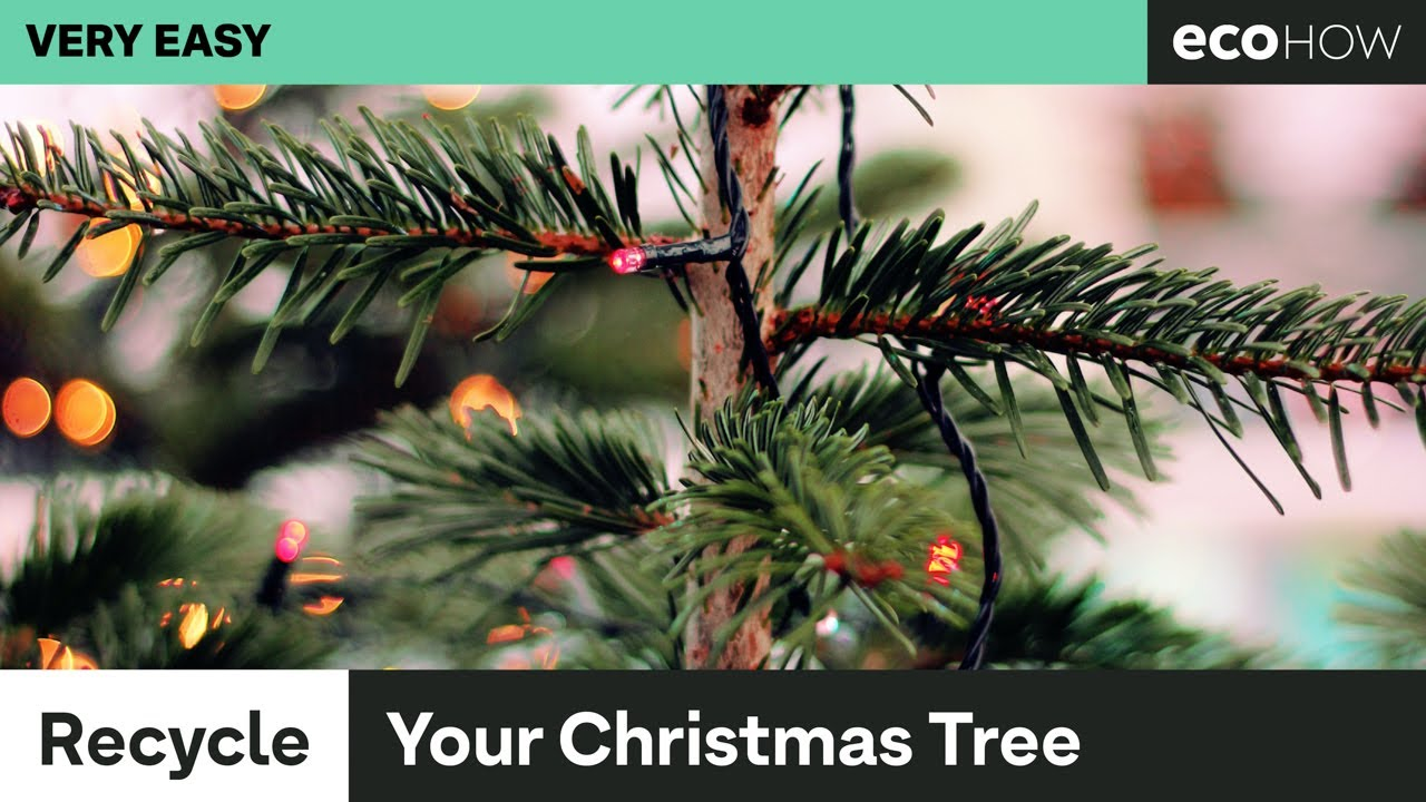 5 things to do with an old christmas tree - YouTube