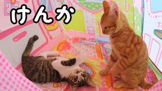●普段遊び●ルイ君とくるみちゃん大喧嘩!?メルちゃんのおうちを取り合い? thumbnail