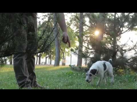 Igy Tanitsd Szarvasgombaszni Kutyad Teach Your Dog To Find Truffles