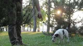 Így Tanítsd Szarvasgombászni A Kutyád / Teach Your Dog To Find Truffles
