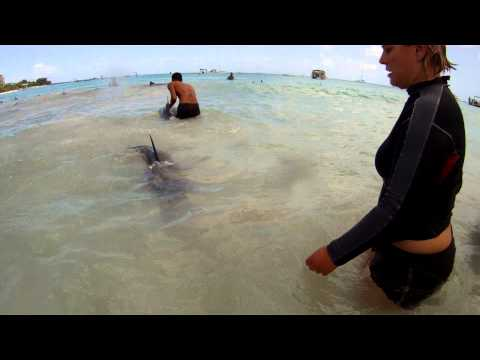 Dolphin rescue in Barbados