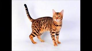 Фото Гороскоп кошек