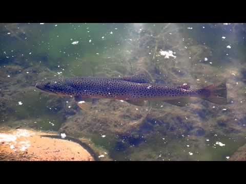 Trout Fishing Tackle Trout Fishing Locations Trout Fishing Scotland