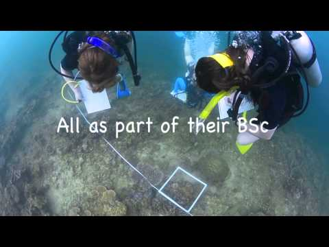 University Marine Biology Field Trip @ Downbelow Marine & Wildlife Borneo