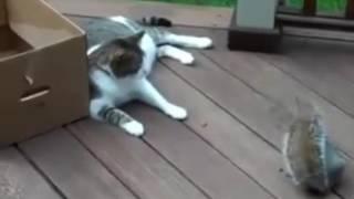 Cat vs Squirrel Funny fight