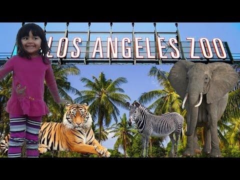 Visit at the ZOO Learn Animal Names with 4 Year Old Lilly Safari Wildlife Educational