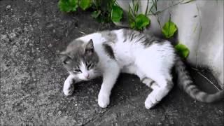 Пьяные коты: Вискас & Кеша