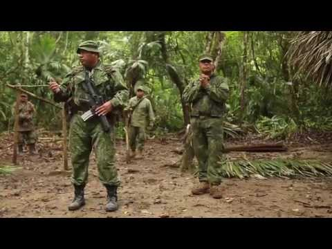 Military Jungle Warfare Training - US Marines In Belize