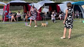Terrier festival Svendborg 19.7.2019