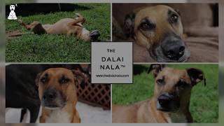 The Dalai Nala
