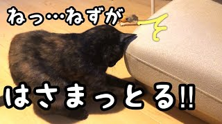 傷防止フェルトをねずみのオモチャと勘違いする猫が可愛いとです。