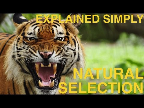 Natural Selection - Explained Simply