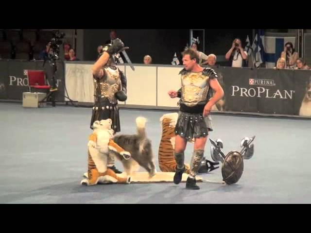 Dogdancing World Championship final, Salzburg 2012