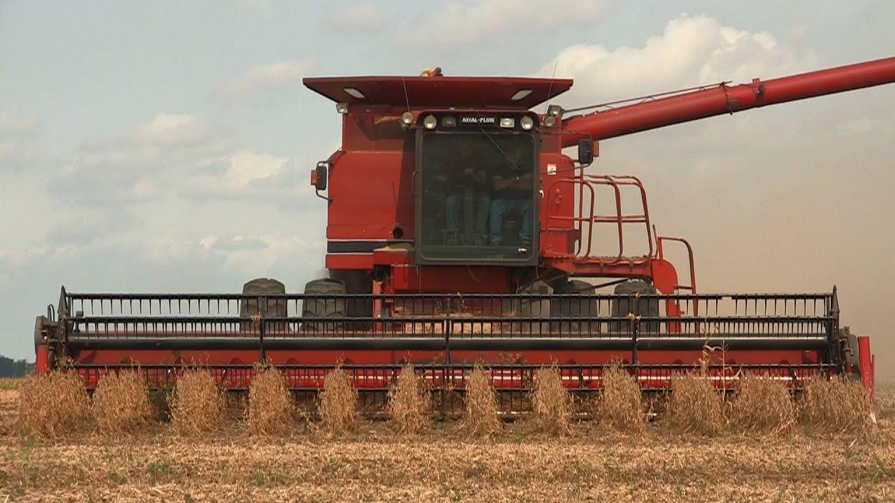 Case Ih 1680 : Case ih combine soybean harvest near kirkland