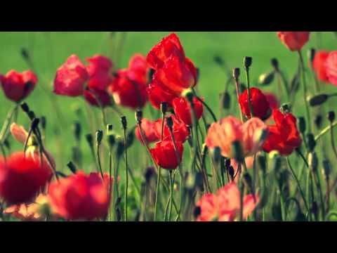 Sheila On 7 - bunga di tepi jalan HD