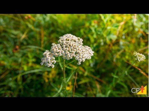 Clique e veja o vídeo Curso Produção Comercial de Plantas Medicinais - Secagem - Cursos CPT