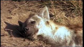 Repeat youtube video Tanzania Serengeti Best Of part 1