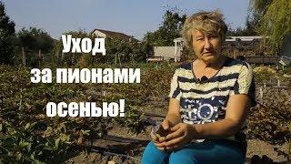 Gambar cover Пионы. Уход за садовыми цветами осенью! / Сад Ворошиловой