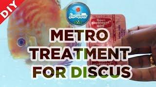 Treat Sick Fish || Metro Treatment Discus Fish || HEX Treatment || Deworming Fish ||