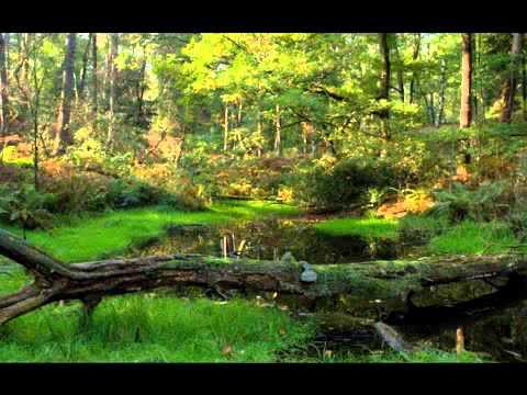 Johann Strauss II   Tales From The Vienna Woods  Geschichten aus dem Wienerwald  FULL