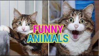 СМЕШНЫЕ ЖИВОТНЫЕ & FUNNY ANIMALS