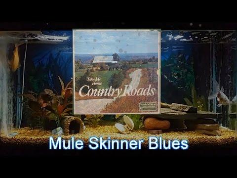 Mule Skinner Blues   Dolly Parton