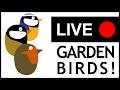 Garden Birds Urdaibai - Live! - En directo - Zuzenean