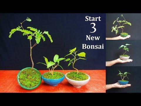 How To Start Bonsai Starting Three New Bonsai Trees Bonsai Care For Beginners Green Plants Youtube