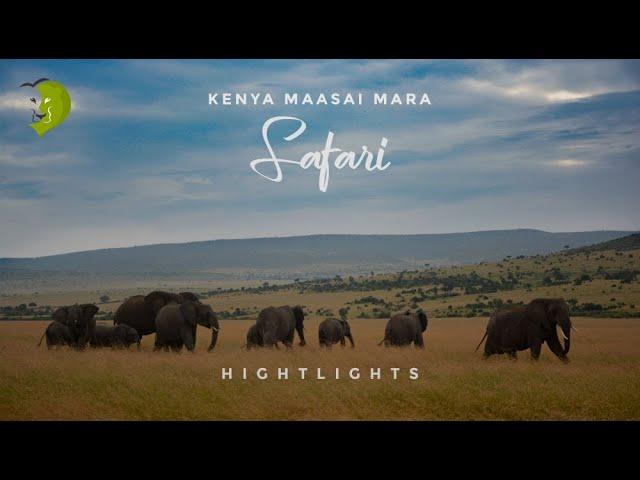 Masai Mara Safari 2018 | Kenya Highlights