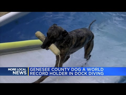 Genesee County dog a world record holder in dock diving