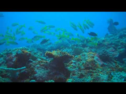 Diving in Vava'u (Tonga)