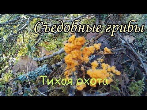 Неизвестные наземные пластинчатые грибы