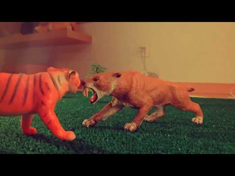 Smilodon Populator VS Ngandong Tiger