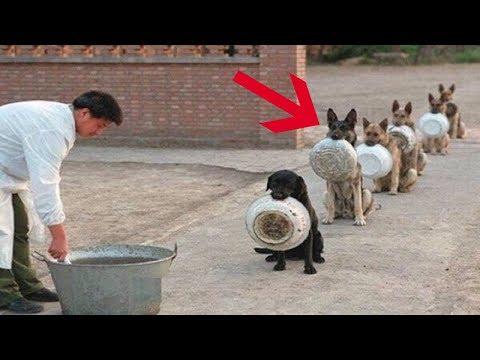 أذكى 10 سلالات كلاب في العالم