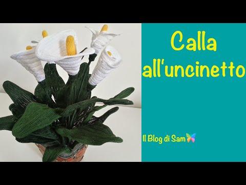 Spiegazione Dellorchidea Alluncinetto By Sam