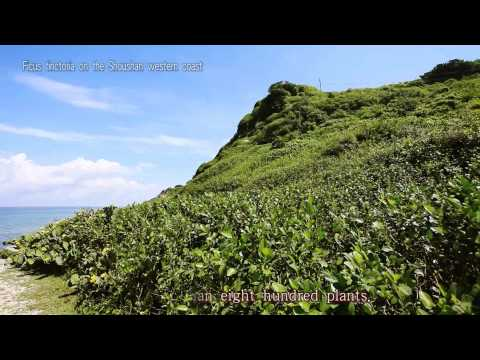 Shoushan National Nature Park 3mins short film(English)
